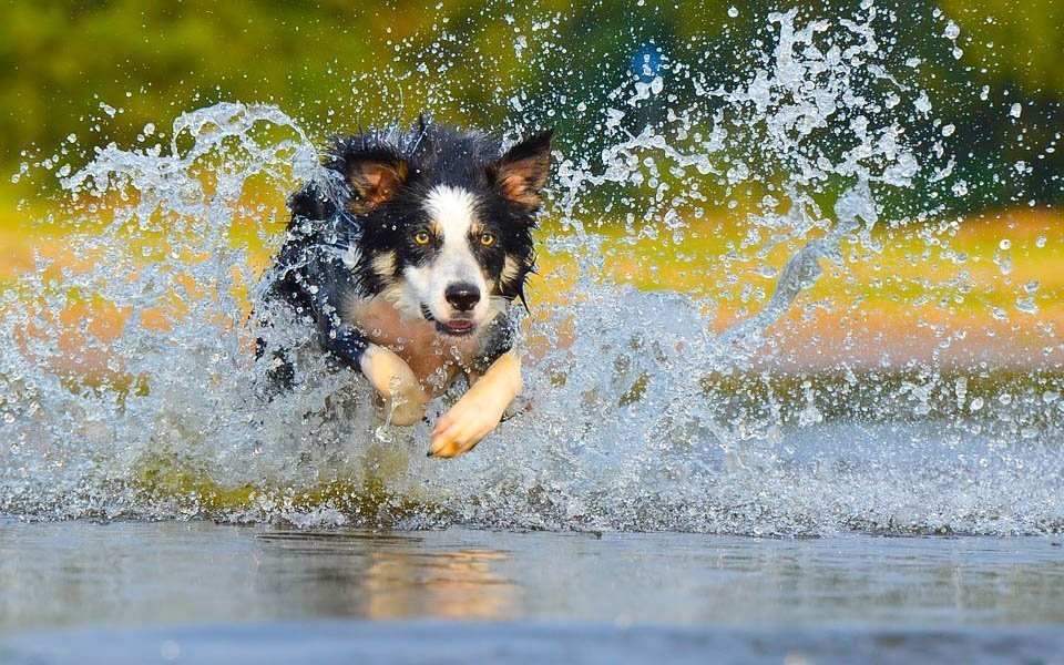 Pobyt u vody se spoustou plavání na psí způsob