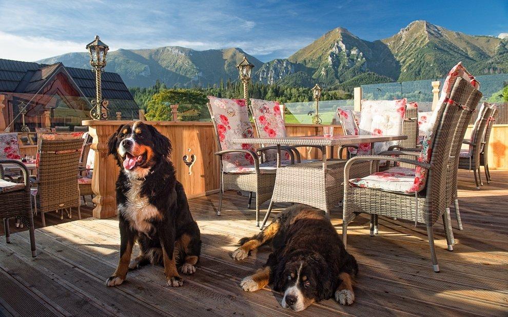 Pes Bernie je maskotem Wellness Penzionu Strachan