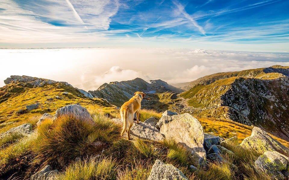 Dovolená na horách i s vaším psem
