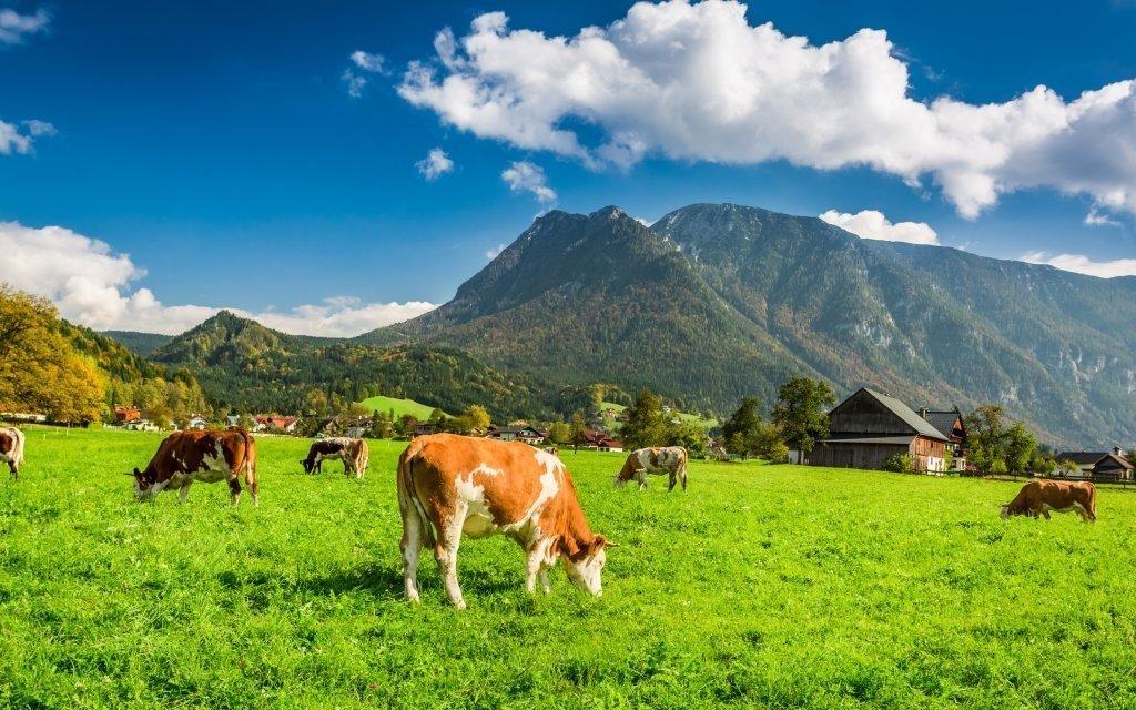 Rakouské Alpy u Hochkaru na léto v českém pensionu Sun se snídaní