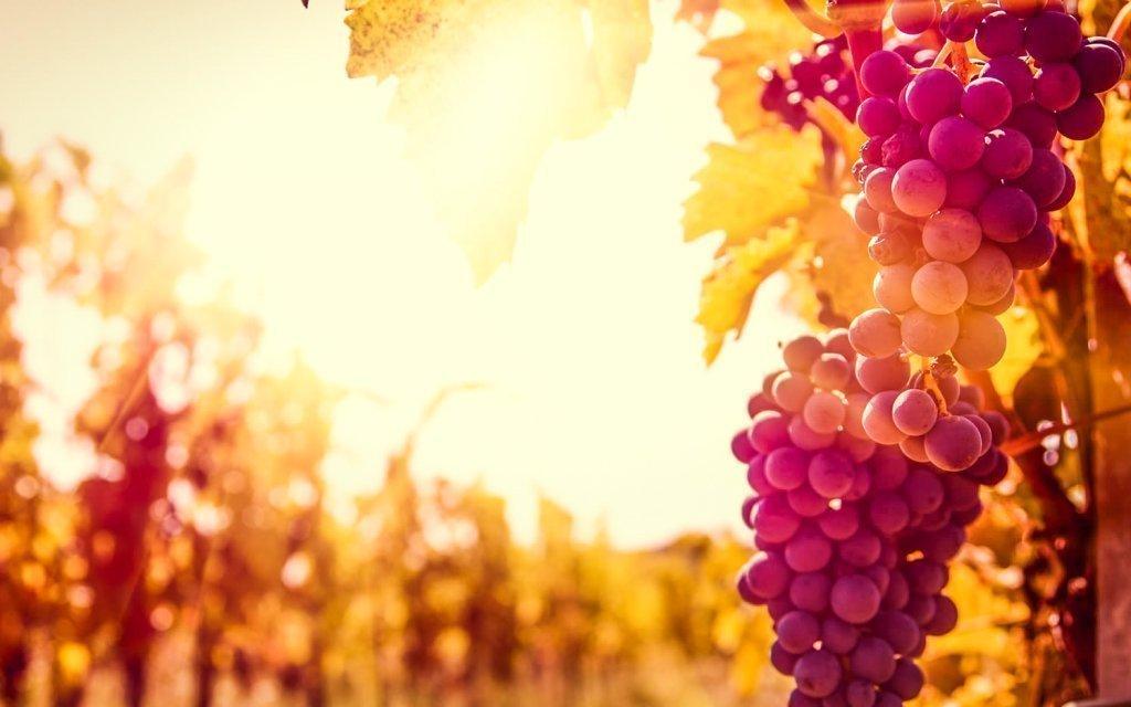 Jižní Morava: vinařský pobyt s neomezenou konzumací vína v penzionu V Zahraničí