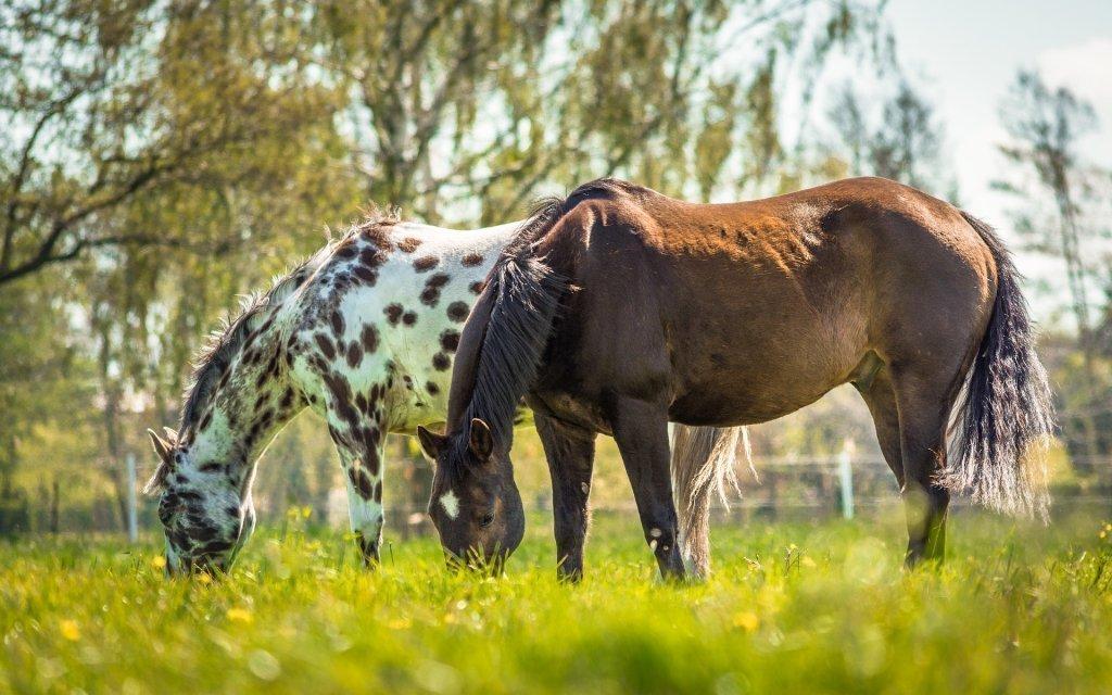 Malá Fatra pro milovníky koní v Penzionu U Kovbojky s polopenzí a projížďkou