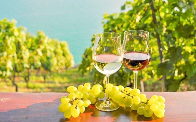 Jižní Morava v penzionu Šatovské Lípy s neomezenou konzumací vína i degustací