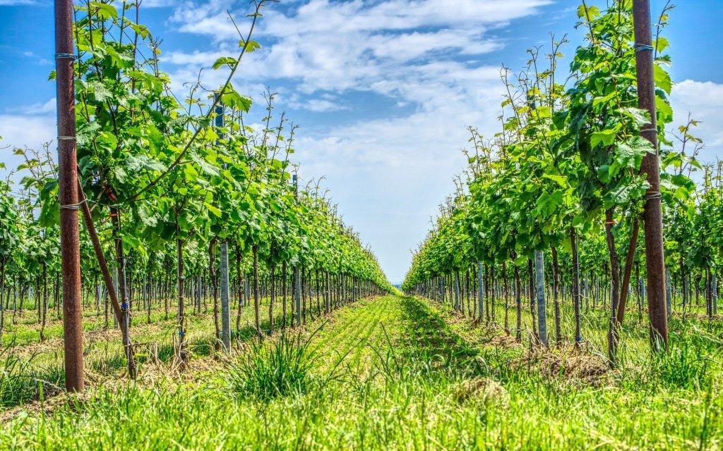 Jižní Morava: vinařský pobyt s polopenzí v Penzionu Mlýn Bořetice